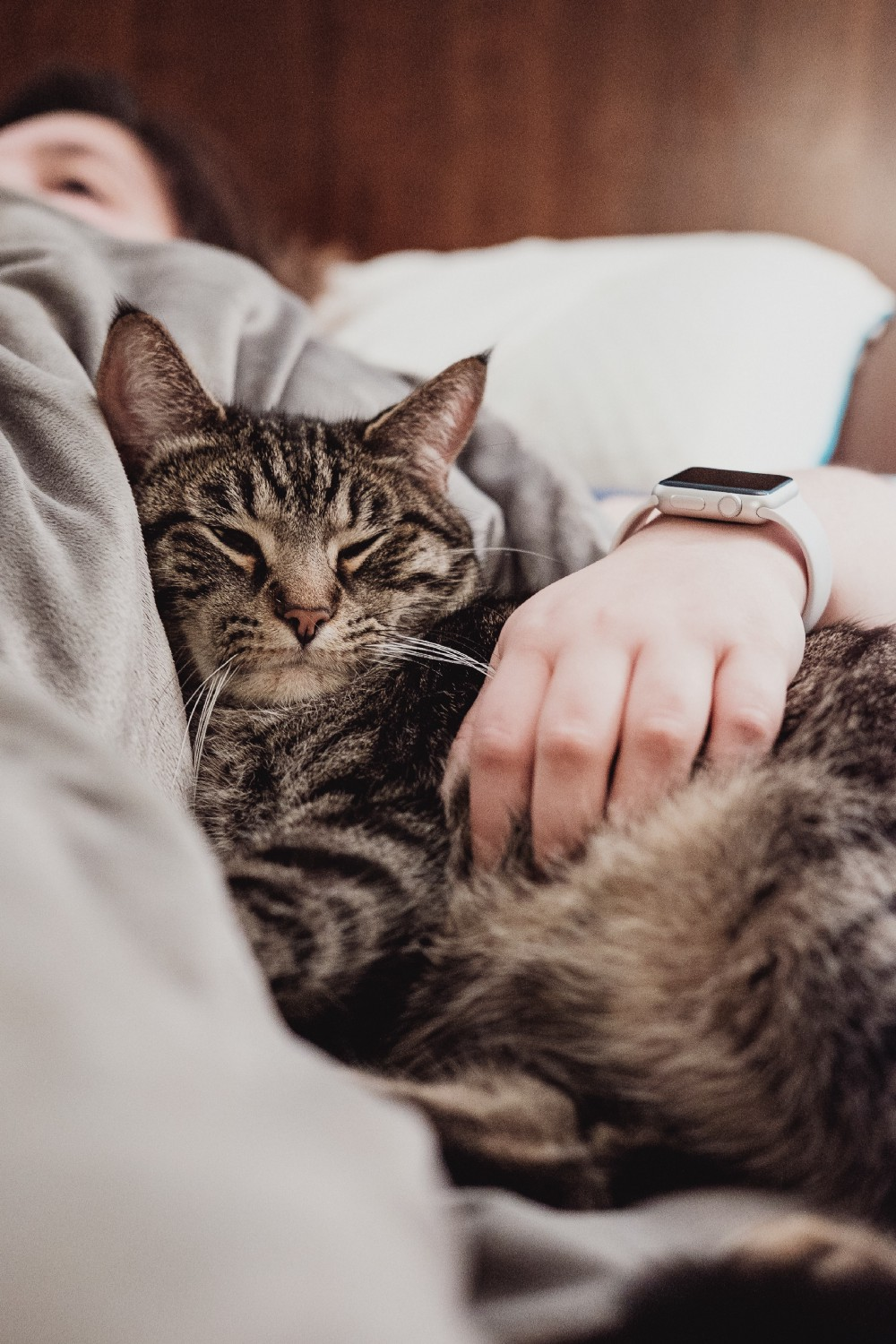 An image of a cat snuggling with its owner.